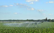 Free Watering Corn Crop Royalty Free Stock Photo - 25690315
