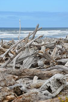 Free Driftwood On The Beach Royalty Free Stock Image - 25691106