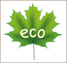 Free Eco Maple Leaf Stock Photography - 25694472