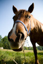 Free Young Horse Stock Photo - 2579190