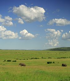 Free Two Elephants Royalty Free Stock Photos - 2570178