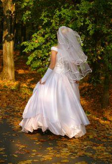 Free Beautiful Bride Royalty Free Stock Photo - 2570315