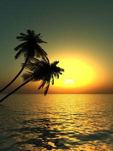 Free Palms Stock Image - 2570871