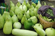 Free Fresh Gourd Stock Image - 2572211
