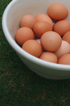 Free Farm Fresh Eggs Stock Photography - 2572332