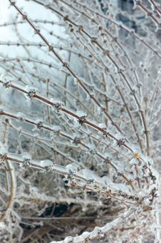 Free Ice Covered Branches Stock Images - 2573124
