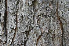 Free Pine Bark - Horizontal Royalty Free Stock Image - 2573886