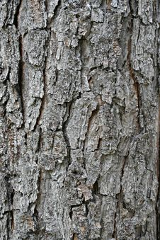 Free Pine Bark - Vertical Royalty Free Stock Images - 2573889