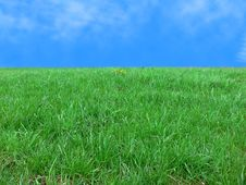 Free Photo Of A Green Grass Royalty Free Stock Images - 2573989