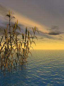 Free Water Grass Stock Photo - 2574480
