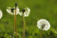 Free Flower Stock Image - 2574641