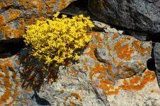 Free Yellow Flowers Stock Photos - 2575013