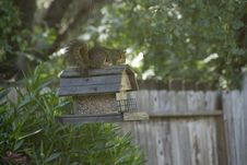 Free Squirrel On The Bird Feeder Stock Image - 2575571