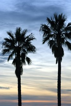 Free Tall Palms And Dramatic Skies Royalty Free Stock Image - 2577276