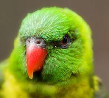 Free Lorikeet Eye Stock Image - 2578311