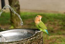 Free Parrot And Water Tap Royalty Free Stock Photography - 2578407