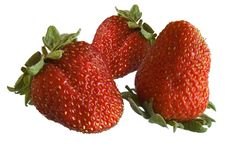 Free Strawberries Stock Photography - 2579992