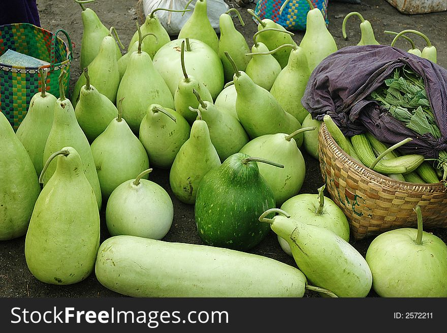 Fresh Gourd