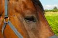 Free Head Of A Horse Stock Photo - 25704210