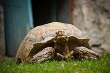 Free Turtle Stock Photography - 25702302
