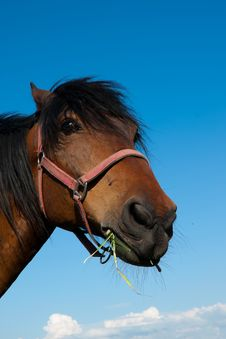 Free Head Of A Horse Royalty Free Stock Images - 25704199