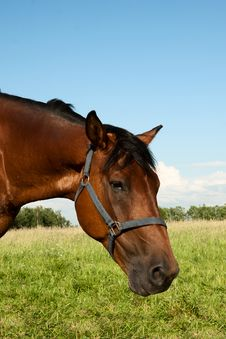 Free Head Of A Horse Stock Photography - 25704202