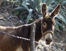 Curious Burro Stock Images
