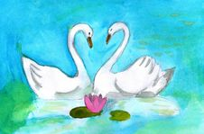 Free Two Swans Stock Photos - 25705943