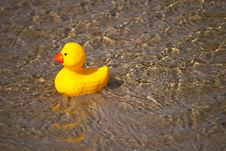 Free Bath Duck Stock Images - 25709164