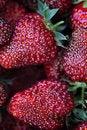 Free Strawberry Stock Photography - 25716742