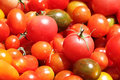 Free Red Tomatoes Royalty Free Stock Image - 25718786