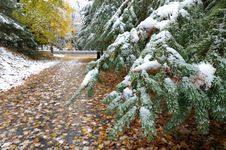 Free Snow On Evergreen In Late Fall Stock Images - 25720854