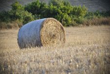 Free Round Hay Bale In Sardinia Stock Images - 25723154
