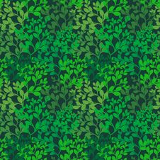 Free Foliage Background Royalty Free Stock Photo - 25725595