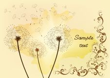 Free Dandelion Background Stock Photography - 25726952