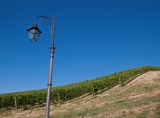 Free A Vineyard In Italy Royalty Free Stock Image - 25730676