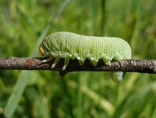Free Caterpillar Stock Image - 25733851