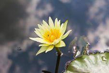 Free Lotus Yellow Royalty Free Stock Images - 25735029