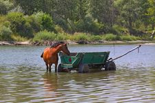 Free A Horse Is In The River Stock Photography - 25737322