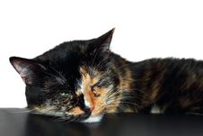 Free Sleepy Cat Royalty Free Stock Photography - 25740977