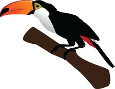 Free Beautiful Toucan On Branch Royalty Free Stock Photos - 25747628