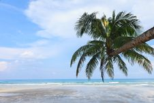 Free Coconut Tree On The Beach Stock Images - 25750714