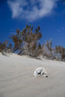 Free Broken Sand Dollar Royalty Free Stock Image - 25752456