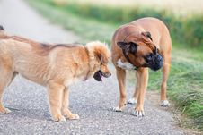 Free Two Dogs Stock Photos - 25756323