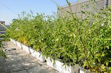 Free Rooftop Garden Stock Photos - 25757623