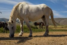 Free White Horse Royalty Free Stock Photography - 25759887