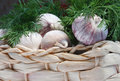 Free Garlic With Dill Royalty Free Stock Photo - 25764445