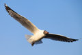 Free A Seagull, Soaring In The Sky Stock Photo - 25769760