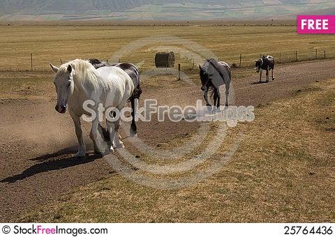 Running free Stock Photo