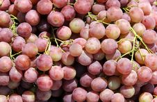 Free Bunch Of Red Grapes Royalty Free Stock Image - 25762836